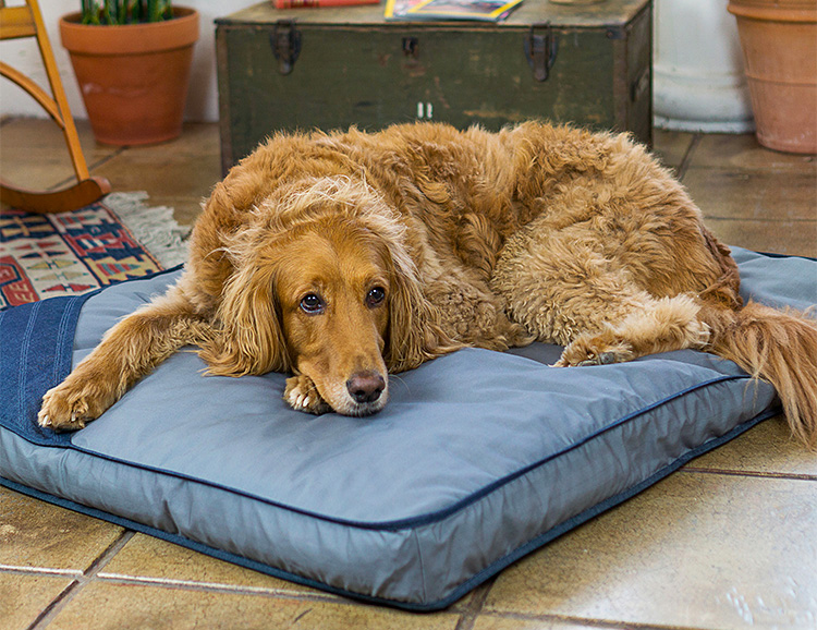 Eco Dog Bed Offers Sustainable Comfort for your 4-Legged Friend at werd.com