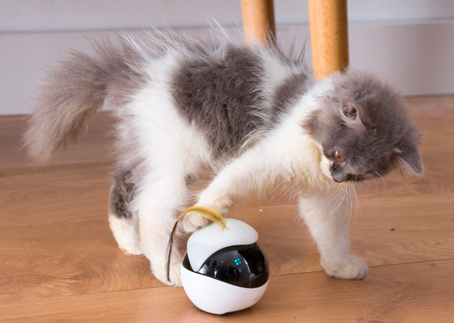 Ebo is a Robotic Playmate for Your Feline at werd.com